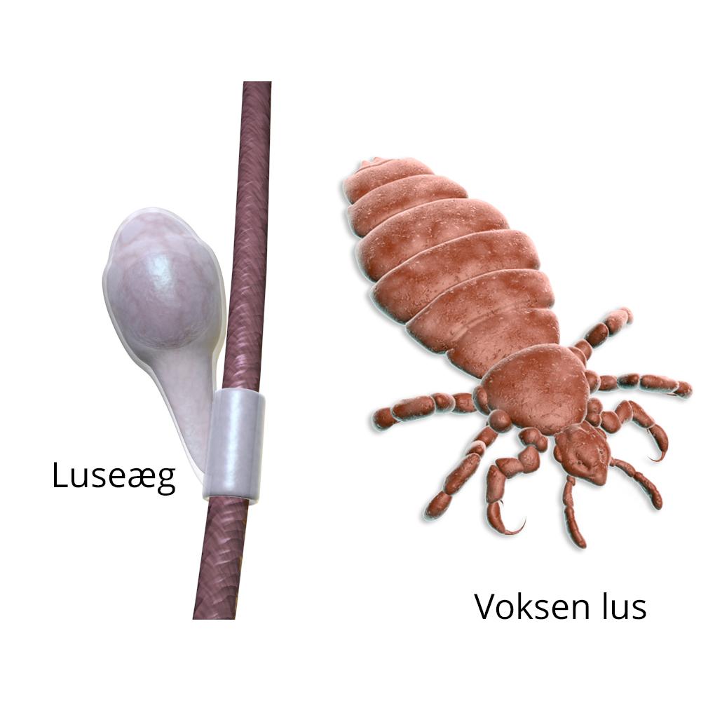 Lusemidler - få en effektiv behandling af lus med de rigtige lusemidler.